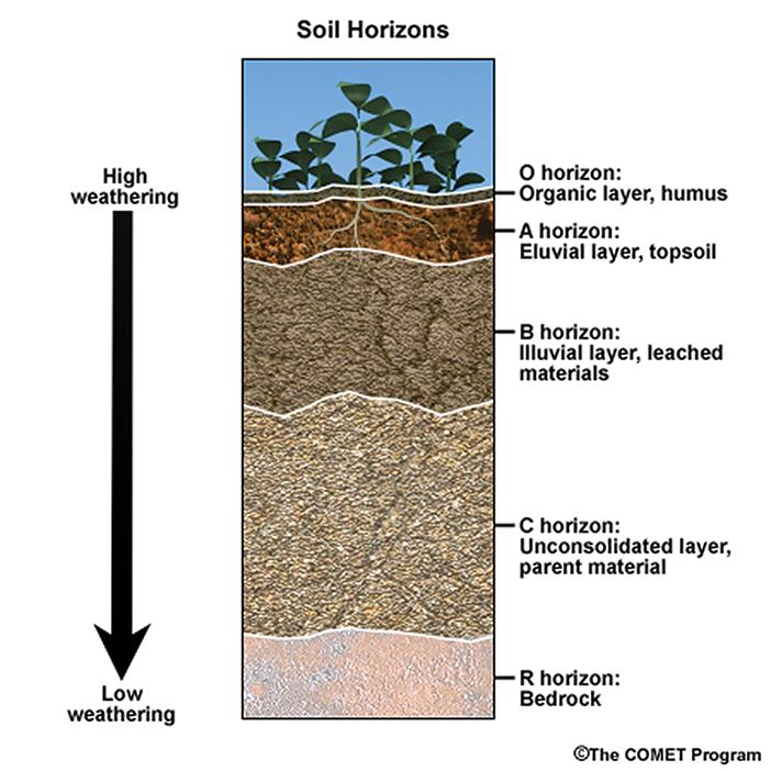 Soil Horizon